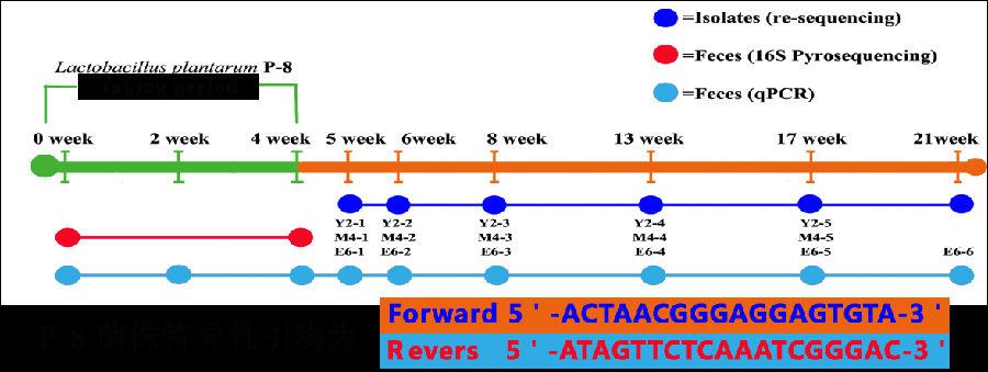 根据 Lactobacillus plantarum P-8优良的益生特性和贮藏稳定性,北京和美科盛生物技术有限公司推出了含有Lactobacillus plantarum P-8的复合益生菌片益生和美(含B. lactis V9、L. casei Zhang和L.plantarum P-8,总活菌数大于3000亿CFU/100g,其中Lactobacillus plantarum P-8含量大于1000亿CFU/100g)(图31)。  北京中研万通科技中心营养食品公司陆续推出了含有Lactobacil